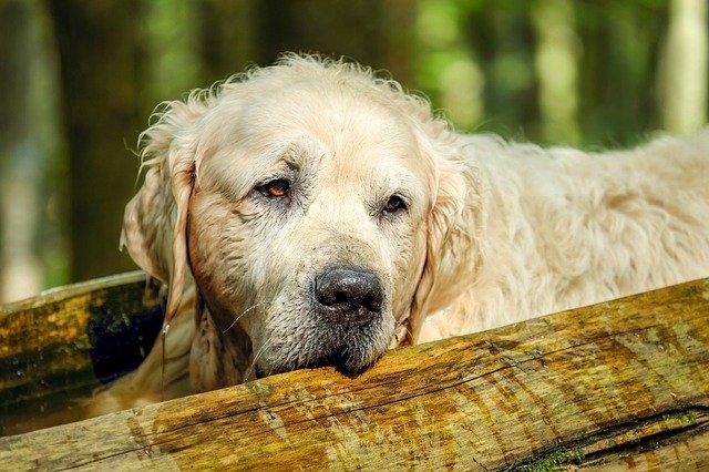 Der alte Hund und was es zu beachten gibt.