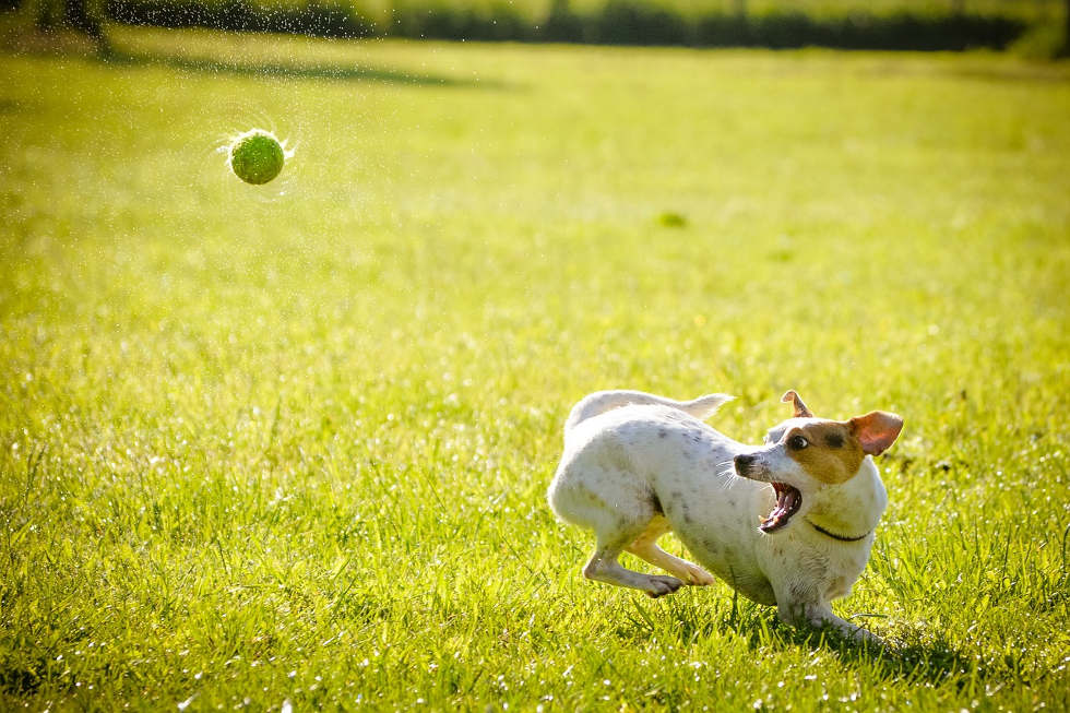 Hundetraining - Hundetraining von zuhause