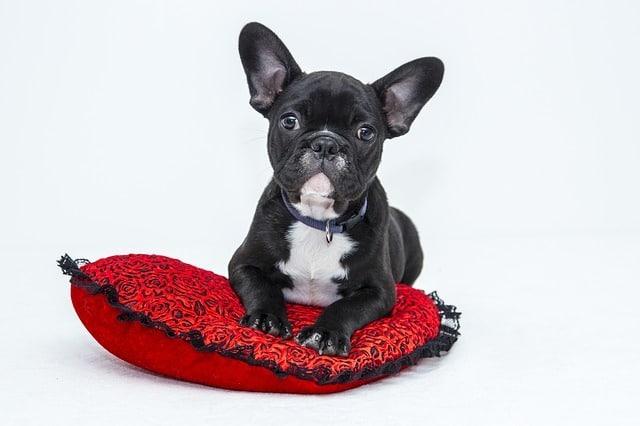 Hundetraining von zuhause - Hundeerziehung.