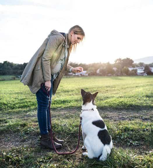 Hundetraining von zuhause - Hundepsychologie