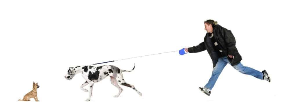 Hundereziehung von zuhause - Hund zeiht an Leine.