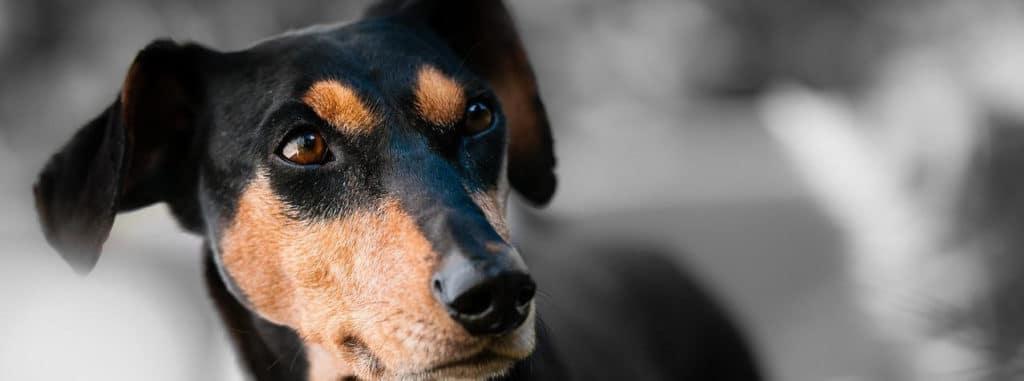 Online Hundeschule Kosten