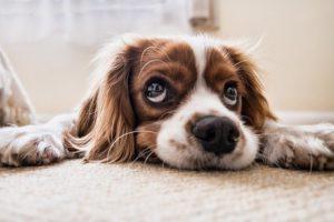 Was muss ich beachten, bevor ich mir einen Hund anschaffe?