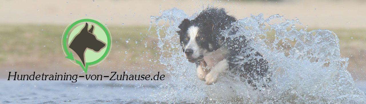 Meine Online Hundeschule Erfahrungen