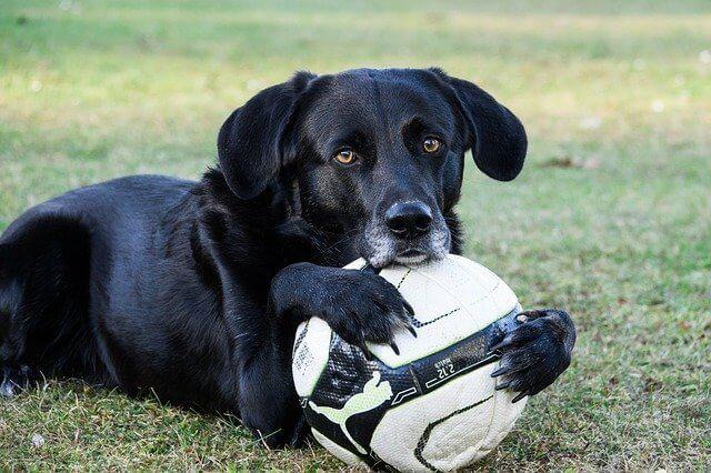 Sportarten für Hund und Mensch