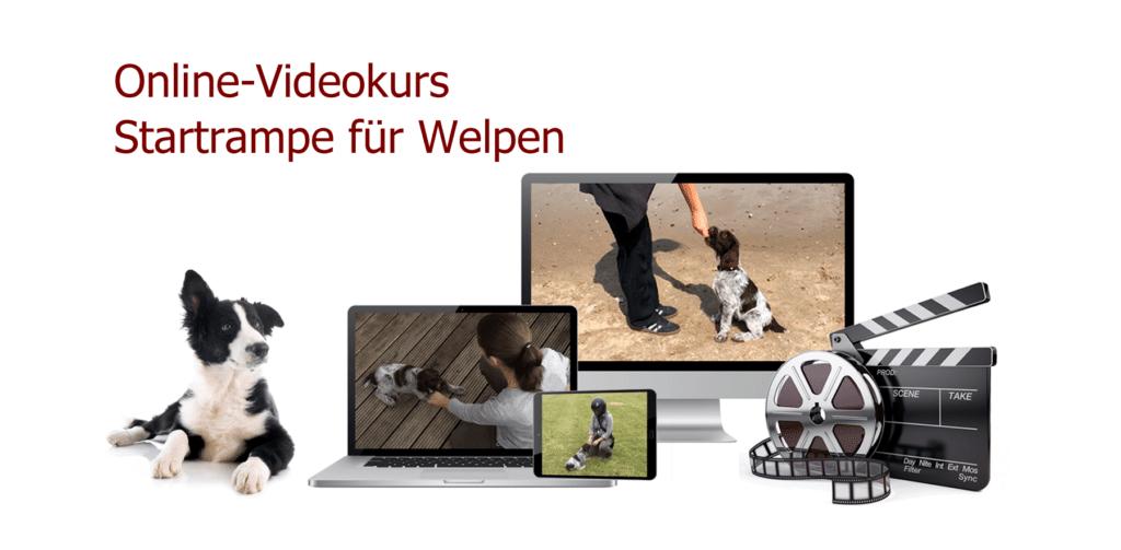 Startrampe für Welpen. Hundeerziehung - Welpenerziehung.