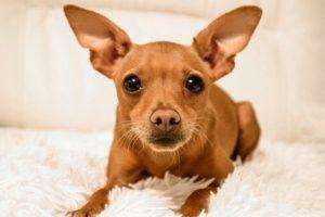 Allgemeine Tipps zu Welpenkauf, Ernährung, Pflege und Erziehung von Hundebabys