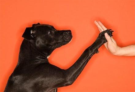 Warum sollten Sie Ihrem Hund ein online Hundetraining von Zuhause ermöglichen?