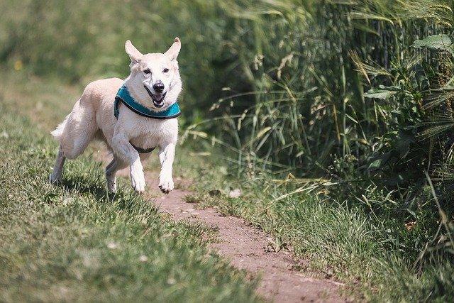 Brustgeschirr oder Halsband beim Hund?