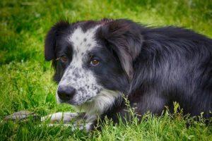 5 Dinge, die Hundebesitzer endlich lassen sollten