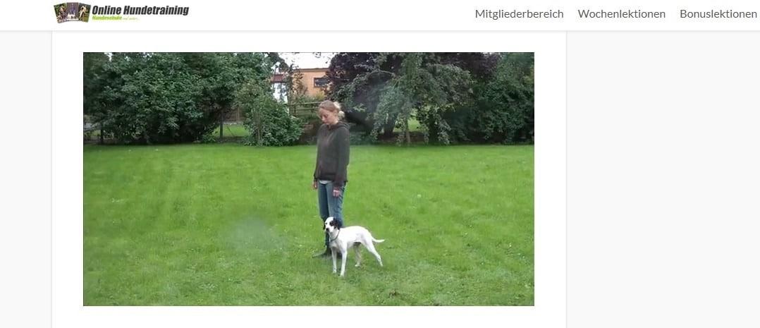 Einblick ins Dashboard - Erfahrungen zum Online Hundetraining von Johanna Esser.