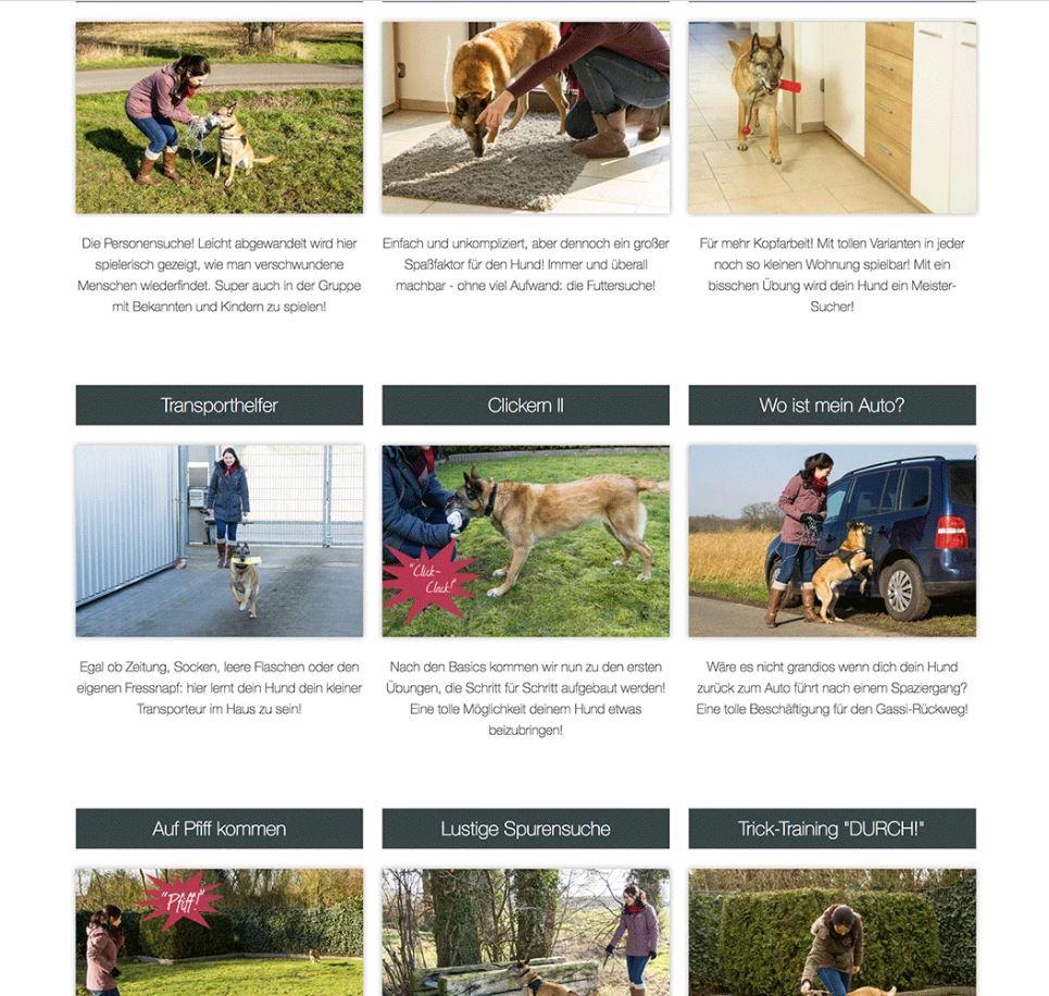 Erfahrungen zum Online-Hundetraining von Johanna Esser - Einblick in die Lektionen.
