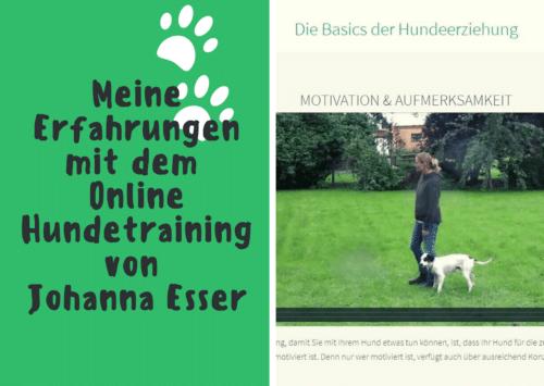 Coverbild mit Ausschnitt aus dem Kurs. Meine Erfahrungen mit dem Online Hundetraining von Johanna Esser.