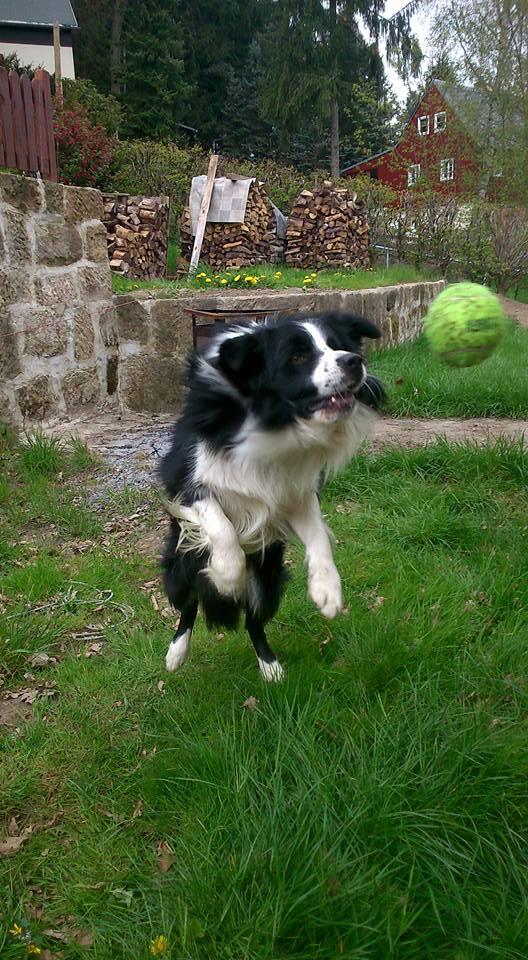 Viele Hunde lieben Bälle - aber groß genug sollte er sein!