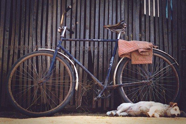 Mit dem Hund am Fahrrad - was muss ich beachten? Hund schläft vor einem Fahrrad.