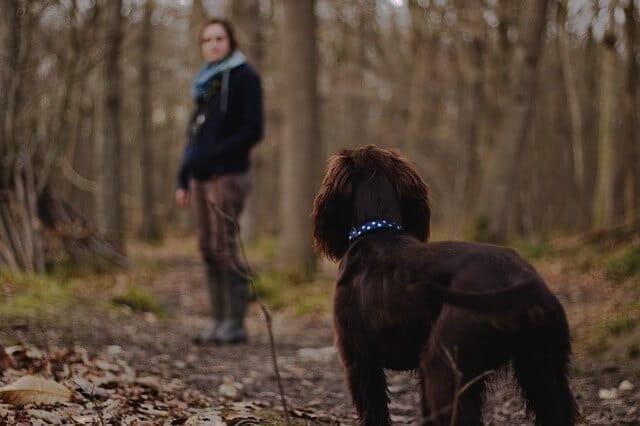 Schilddrüsenunterfunktion beim Hund.