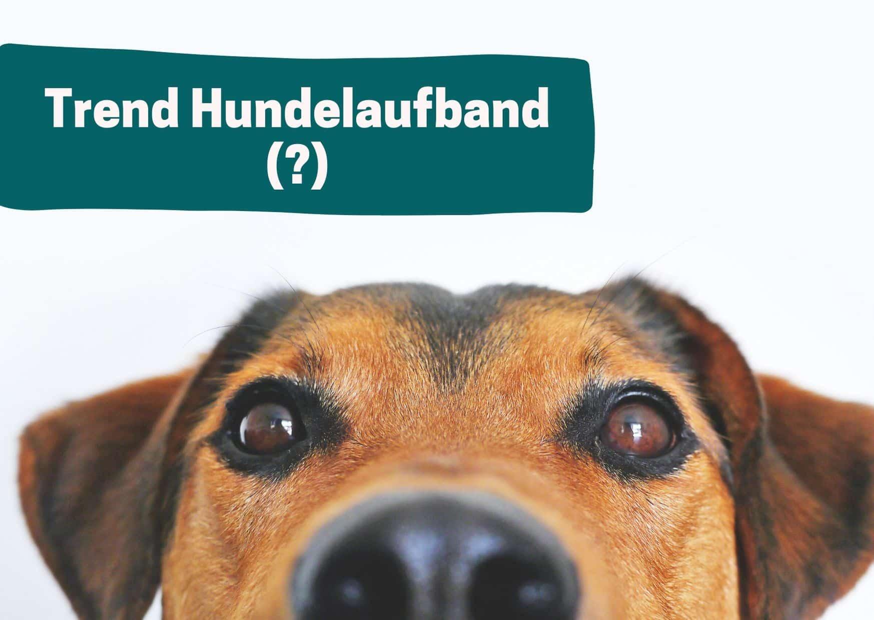 Neugieriger Hund mit Titel Trend Hundelaufband?