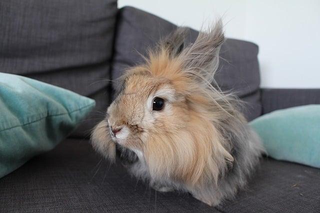 Hauskaninchen: 7 Fakten für das Kaninchen zuhause
