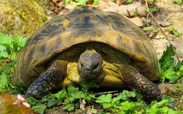 Bei der Landschildkrötenhaltung gibt es einige Punkte zu beachten - z.B. das passende Terrarium.