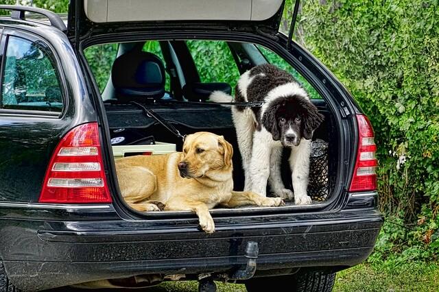 Hundetransportbox: Welches ist die beste Transportbox?