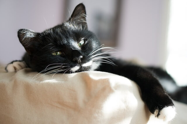 Katze pinkelt ins Bett.
