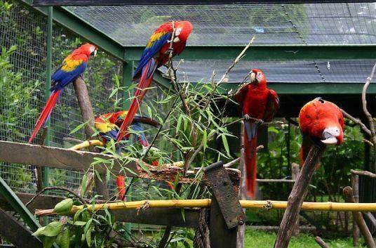 Vogelvoliere außen.