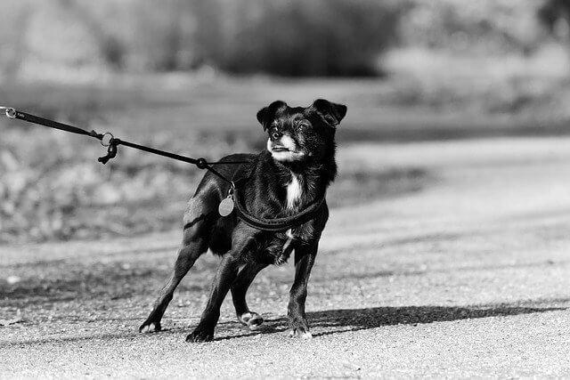 Anti-ZIeh-Geschirre für Hunde
