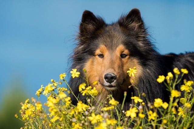 Bachblüten für den Hund