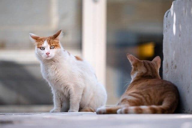 Junge oder alte Katze? Was passt besser zu mir?