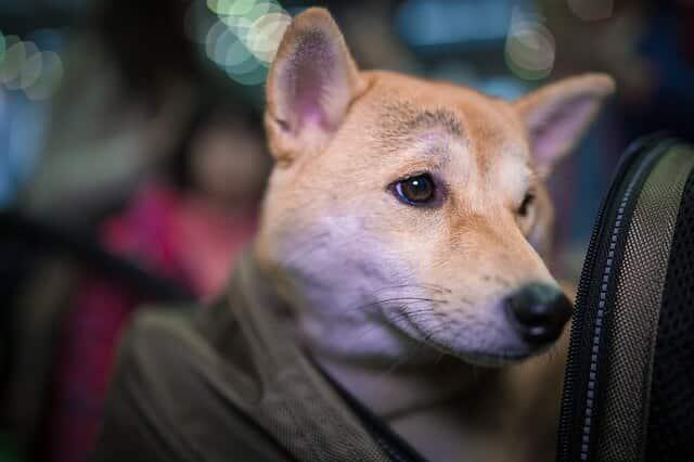 Hunderucksack - Hund im Rucksack