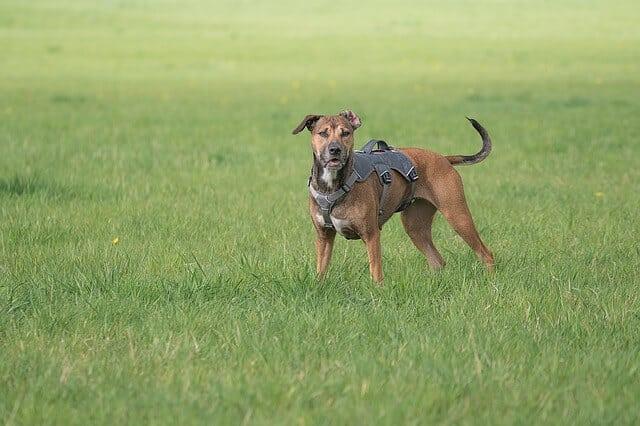 Neigt dein Hund dazu, ängstlich oder gar panisch zu werden, so kann ein Sicherheitsgeschirr dir dabei helfen, ihn an einer Flucht zu hindern.