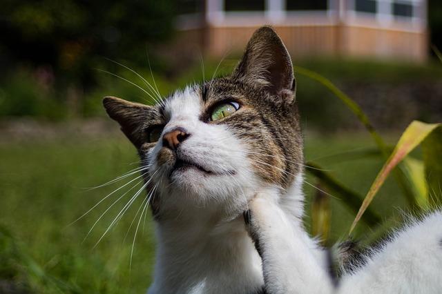 elektrische Flohfalle - Flöhe können Katzen massiv ärgern