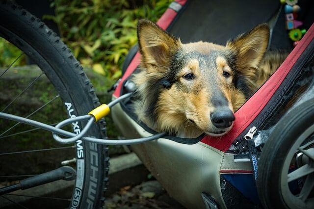 HUndeanhänger fürs Fahrrad.