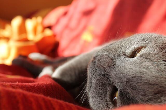 Katze uriniert ins Bett - Katze schläft im Bett.
