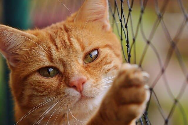Sicherheit geht vor! Das Katzennetz für den Balkon.