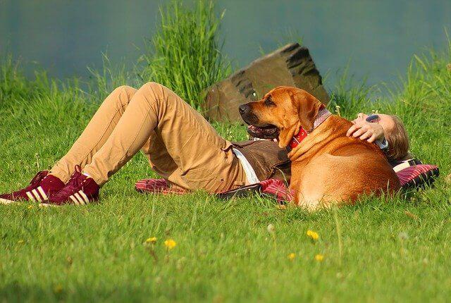 Kühlmatte für Hunde: Perfekt, wenn es im Sommer schnell heiß wird.