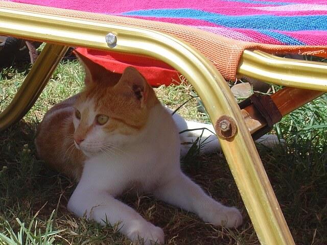 HItze im Sommer: Katze liegt unter Liegestuhl.