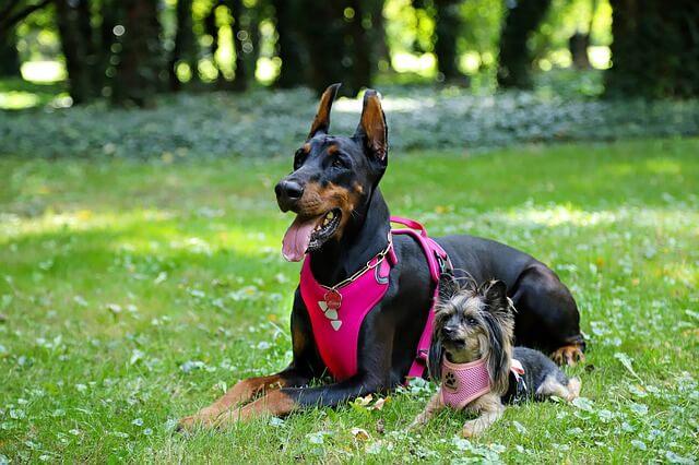 Sicherheitsgeschirre gibt es für große und kleine Hunde.