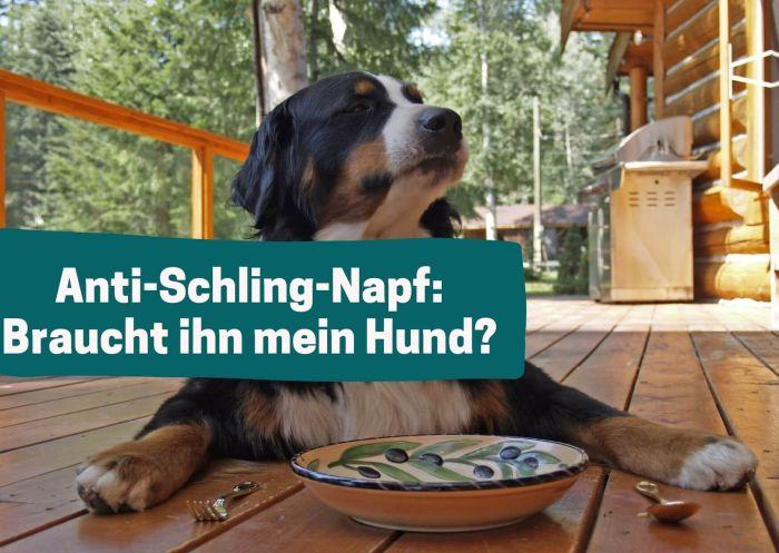 Anti-Schling-Napf - und warum er gut für meinen Hund ist.