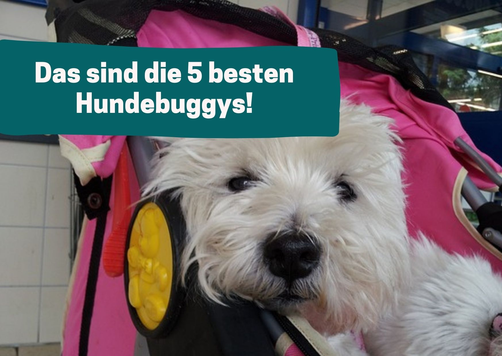 Hund m Buggy.