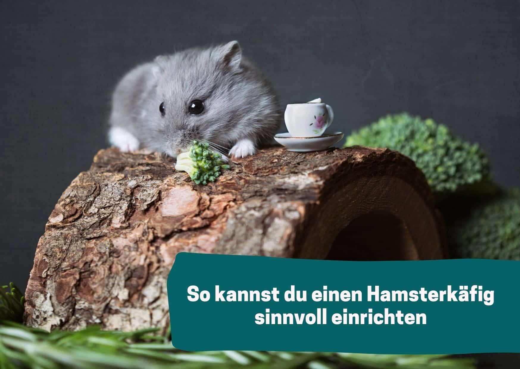 Dein Hamster sollte ich in seinem Zuhause wohlfühlen. SO kannst du einen Hamsterkäfig sinnvoll einrichten.