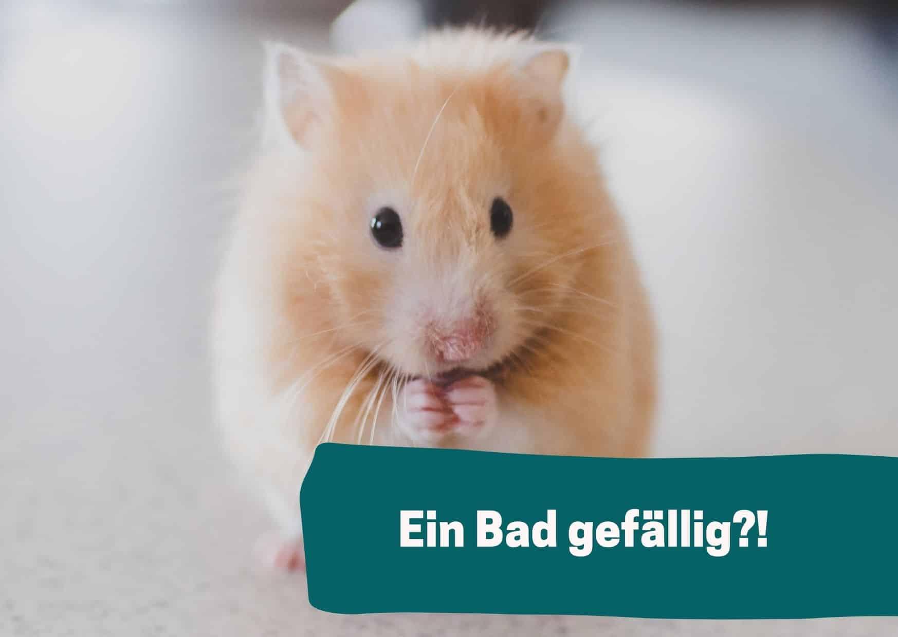 Lust auf ein Bad? Aber bitte kein Wasser! Hamster baden am liebsten im Sand.