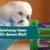 Spielzeug-Ideen für den Wellensittich