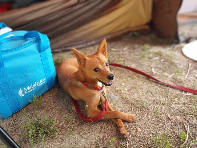 Camping mit Hund - Dabei gibt es einiges zu beachten.