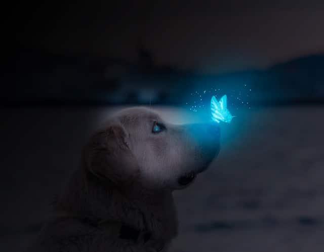 Mit einem Leuchthalsband wird dein Hund im Dunkeln besser wahrgenommen.