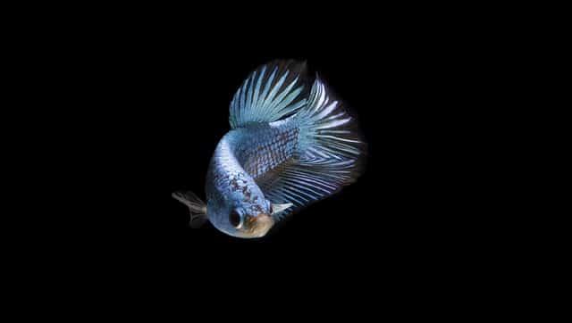 Manchmal muss man einen Fisch von seinem Leid erlösen.