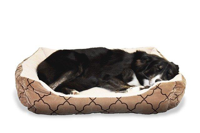Hund im orthopädischen Hundebett.
