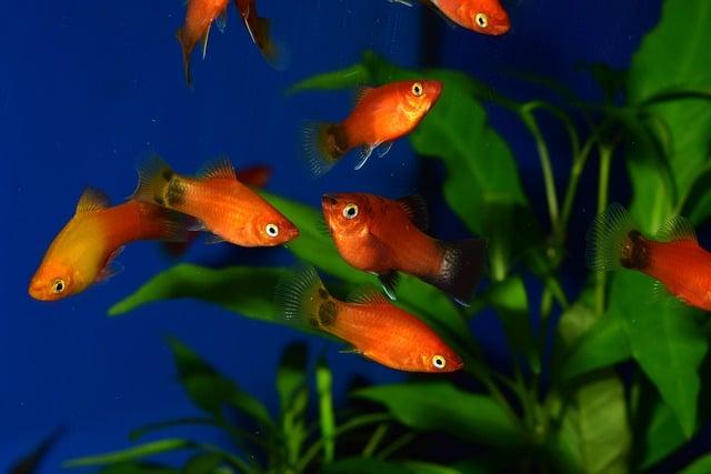 Aquarium Fischkrankheiten