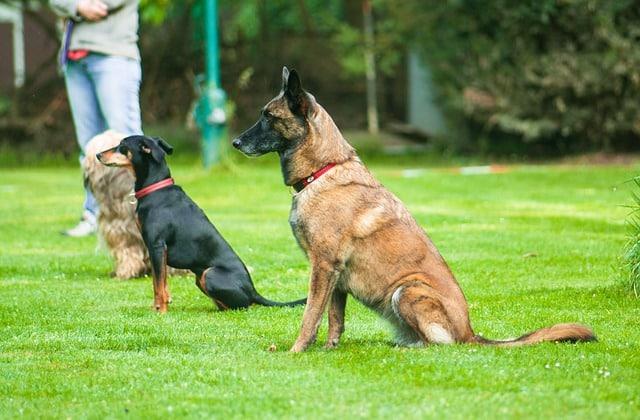 Die beliebtesten Hundesportrassen.