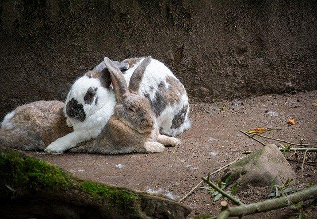 Kaninchenstall mit Auslauf.